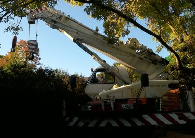 Careful of the tree mobile crane lift